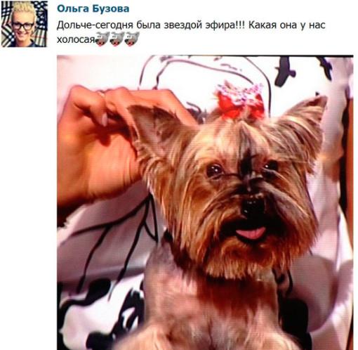 Ольга-Бузова-завела-собачку-2