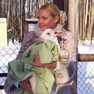 Козёл Волочковой грустит в зоопарке.