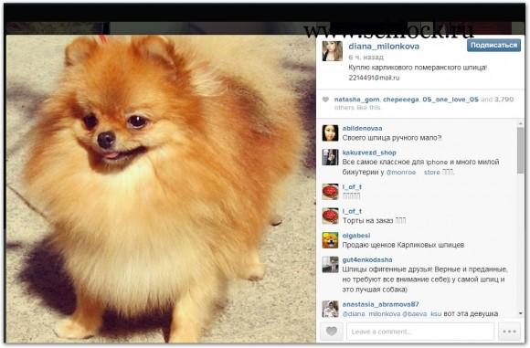 Диана Игнатюк в инстаграм 27.05.14. куплю щенка