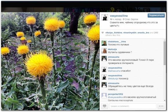 Василина Михайловская в инстаграм 17.07.14. Что это за цветы?