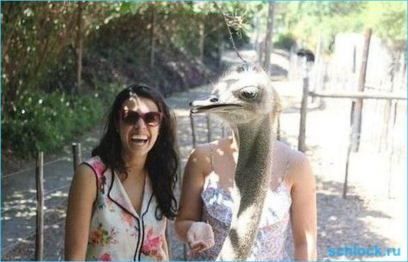 Артемова и страус