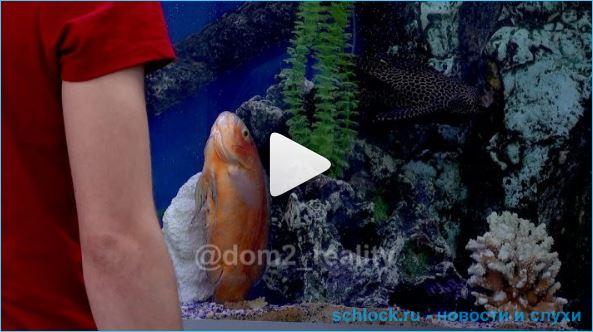 Анонс дом 2 на 08.07.19. Оганесян спасает золотых рыбок